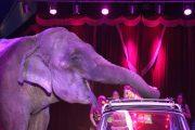 Kuchen macht glücklich im Circus Busch